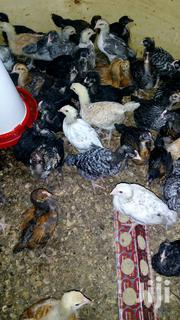 One Month Old | Livestock & Poultry for sale in Busia, Nambale Township
