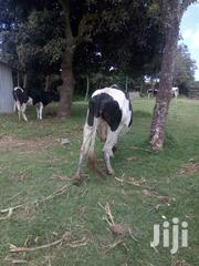 Dairy Cow 4 Sell | Other Animals for sale in Kiambu, Lari/Kirenga