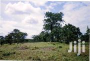 A Plot of Land on Sell in Diani Beach. 10 Minutes Walk to the Ocean.   Land & Plots For Sale for sale in Kwale, Ukunda