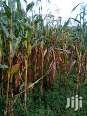 Green Maize | Meals & Drinks for sale in Bungoma, Misikhu