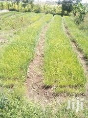 Prime 2 Acres Agricultural Land at Ngobit, Laikipia | Land & Plots For Sale for sale in Laikipia, Ngobit