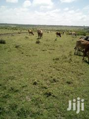 8 Acres Land for Sale at Ngobit | Land & Plots For Sale for sale in Laikipia, Ngobit