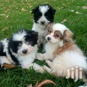 White Pet Puppies | Dogs & Puppies for sale in Nairobi, Nairobi West