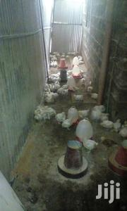Chicken Boroiler For Sell | Livestock & Poultry for sale in Nyeri, Rware