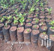 Planting Bags/ Seedling Bags | Feeds, Supplements & Seeds for sale in Nairobi, Nairobi Central