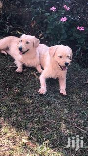 Females Pupies | Dogs & Puppies for sale in Nairobi, Nairobi Central