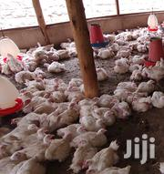 Big High Quality Broilers | Livestock & Poultry for sale in Kiambu, Kalimoni