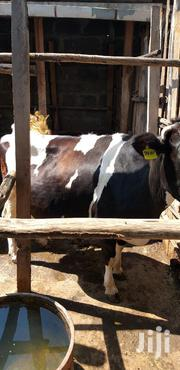 Freshian High Yield Cow | Livestock & Poultry for sale in Nakuru, Nakuru East