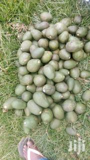Fuerte Avocados On Sale. | Meals & Drinks for sale in Kericho, Ainamoi