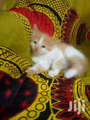 Beautiful Fluffy Kittens | Cats & Kittens for sale in Nairobi, Kilimani