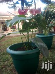 Flowers For Your Beautiful Home And Office | Garden for sale in Nairobi, Roysambu