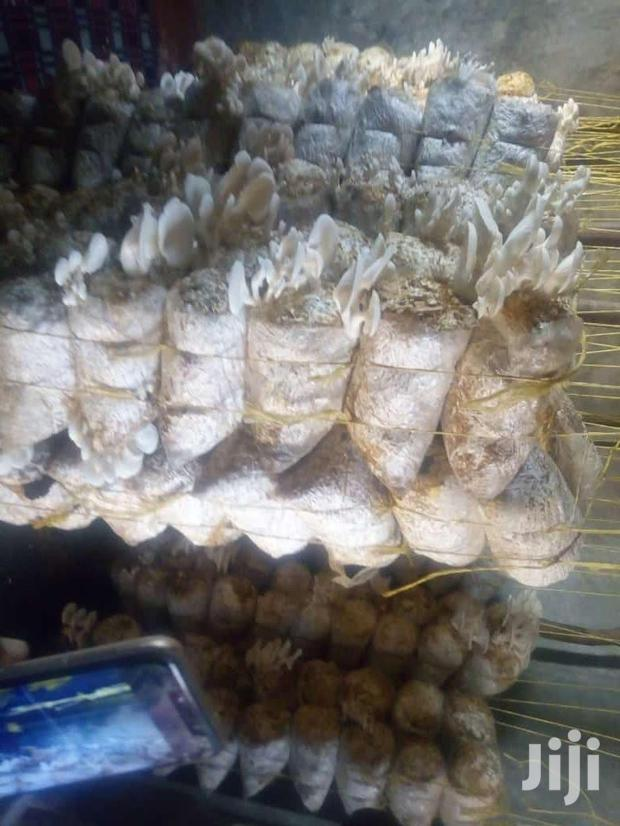 Archive: Oyster Mushrooms