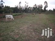 Land For Sale | Land & Plots For Sale for sale in Machakos, Kangundo East