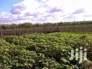 250 Acres Agricultural Land Baricho/Dakacha Kilifi County | Land & Plots For Sale for sale in Kilifi, Magarini