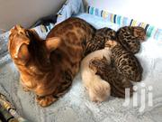 Cute Bengal Kittens Available For A New Home | Cats & Kittens for sale in Nairobi, Hospital (Matha Re)