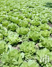 All Vegetables | Feeds, Supplements & Seeds for sale in Kiambu, Lari/Kirenga