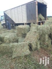 HAY Associate | Feeds, Supplements & Seeds for sale in Nakuru, Nakuru East