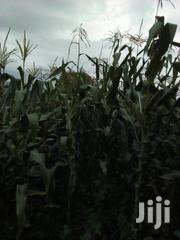 1acre Residencial/ Agricultural Land for Sale | Land & Plots For Sale for sale in Kericho, Londiani