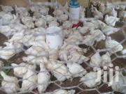 Broilers Chicken | Livestock & Poultry for sale in Kilifi, Malindi Town