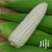 Green Fresh Maize Cobs | Meals & Drinks for sale in Nairobi, Nairobi Central