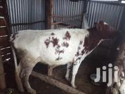 Pure Breed Ayrshire Heifer | Livestock & Poultry for sale in Nakuru, Biashara (Naivasha)