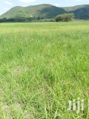 Boma Rhodes, Hay Grass On Quick Sale | Feeds, Supplements & Seeds for sale in Nakuru, Mai Mahiu