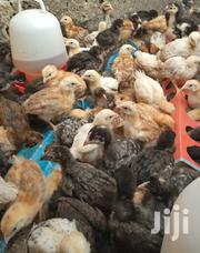 Improved Kienyenji Chicks | Livestock & Poultry for sale in Nairobi, Komarock