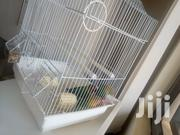 Birds Cages | Pet's Accessories for sale in Nairobi, Nairobi Central