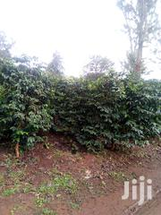Githunguri Mitahato Two Acres Prime Shamba at 16m Negotiable. | Land & Plots For Sale for sale in Kiambu, Githunguri