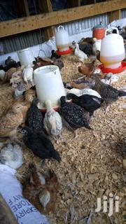 Improved Kienyeji Chicks And Chicken For Sale...Vaccinated | Other Animals for sale in Kirinyaga, Kerugoya
