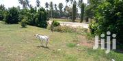 Land on Sale Kilifi Tezo | Land & Plots For Sale for sale in Mombasa, Majengo