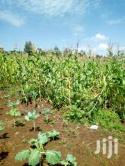 Ndhiwa Development Forum   Land & Plots For Sale for sale in Homa Bay, Kwabwai