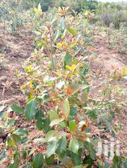 Miraa Land for Sale   Land & Plots For Sale for sale in Embu, Nthawa