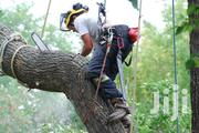 Tree Cutting Services | Landscaping & Gardening Services for sale in Nairobi, Karen