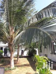 3 Bedrooms To Let Mtwapa | Houses & Apartments For Sale for sale in Mombasa, Shanzu