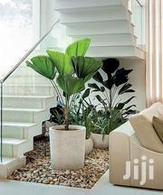 Under Stairs Landscaping Services | Landscaping & Gardening Services for sale in Nairobi, Kitisuru