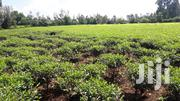 1/2 Acre For Sale In Jericho/Kapsuser Touching The Highway | Land & Plots For Sale for sale in Kericho, Kapsuser