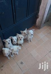 Selling Of Puppies | Dogs & Puppies for sale in Kajiado, Ongata Rongai