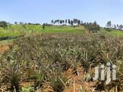 Selling 9 Acres Of Land In Gatundu South Ksh 2.8m Pa | Land & Plots For Sale for sale in Nyeri, Iriaini