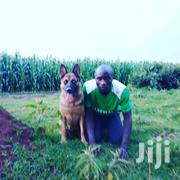 Gaurd Dog On Sale(Level 1) | Dogs & Puppies for sale in Trans-Nzoia, Kiminini