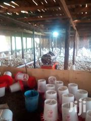 Day Old Broilers, Layers And Kuroilers Chicks | Livestock & Poultry for sale in Nairobi, Nairobi Central