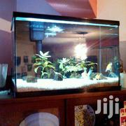 White Gravel Aquariums | Home Accessories for sale in Nairobi, Woodley/Kenyatta Golf Course