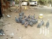 Guinea Fowls Kanga | Livestock & Poultry for sale in Kisumu, Central Nyakach