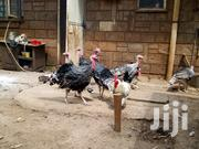 Turkey Meat And Breeding | Livestock & Poultry for sale in Kiambu, Kikuyu