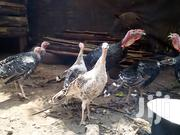Poultry And Turkey | Livestock & Poultry for sale in Kiambu, Kikuyu