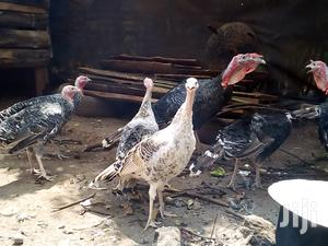 Poultry And Turkey