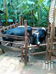Wamuthui Farm | Livestock & Poultry for sale in Murang'a, Muguru