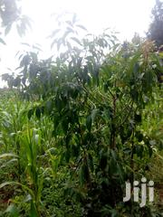 1/2acre For Sale | Land & Plots For Sale for sale in Nyeri, Karatina Town
