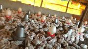 Broiler Chicken | Livestock & Poultry for sale in Kilifi, Malindi Town