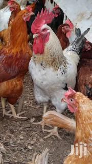 Typical Kienyeji Chicken And Jogoo | Livestock & Poultry for sale in Nakuru, Njoro